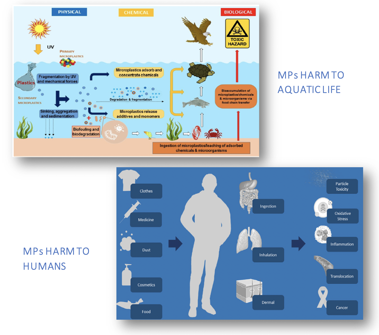 Figure 2. (Top) MPs affect aquatic environments via a number of processes (physical, chemical, biological) [5]; (Bottom) Their potential harm to humans and exposure routes [7].